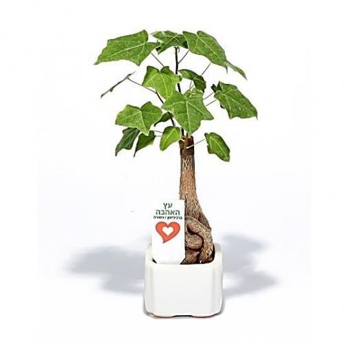 עציץ אהבה קרמיקה קטן