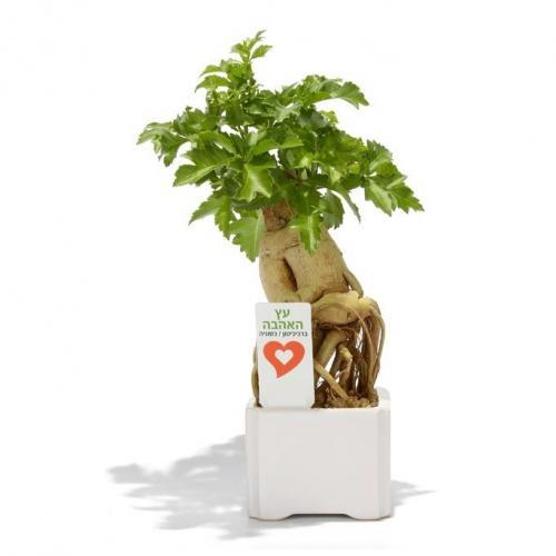 עציץ אהבה קרמיקה בינוני