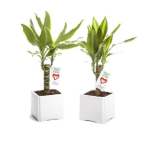 עציצי  העצמה אישית ועסקית בכלי קרמיקה